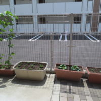 菜園H30.6.16
