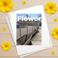 Flower 2021.3.11